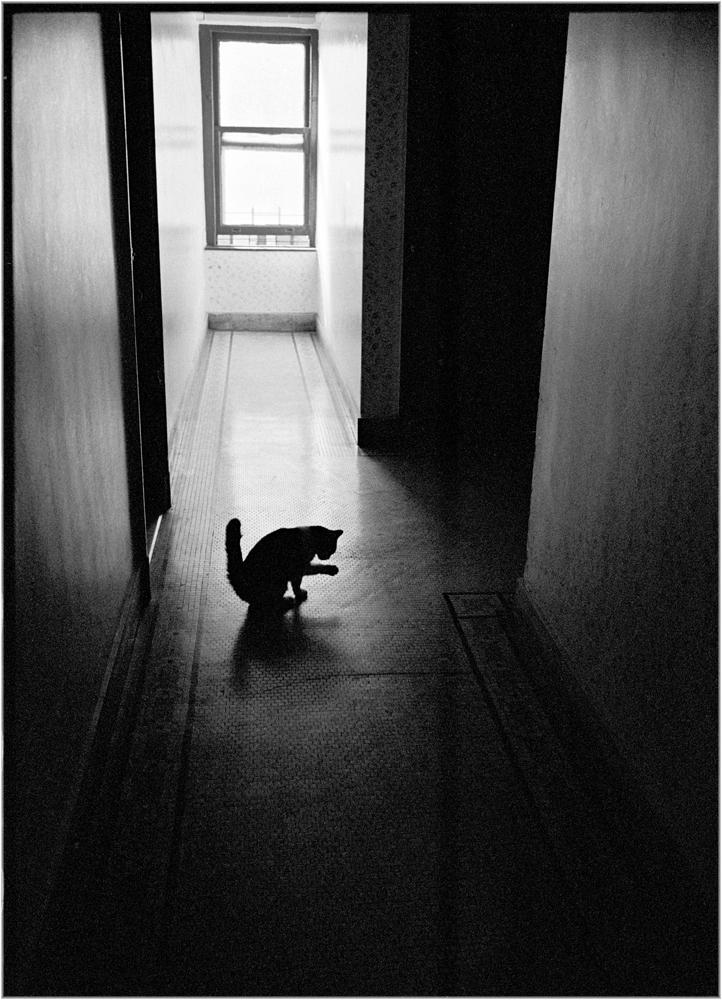 matt-weber-cat