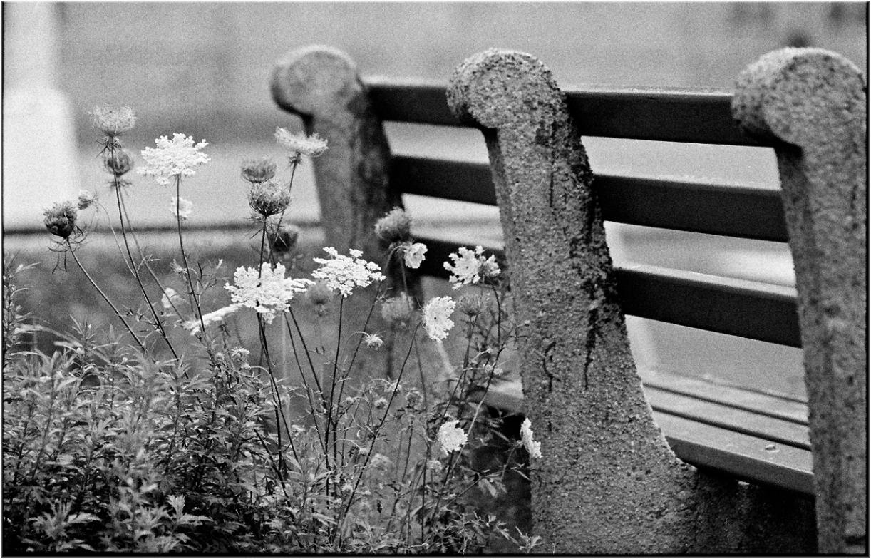 flowers-matt-weber