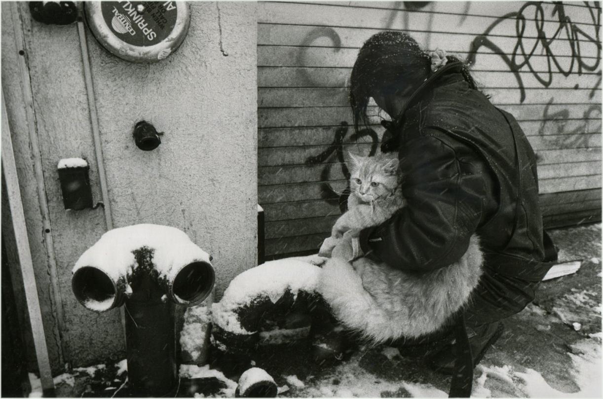 cat-snow-NYC-matt-weber