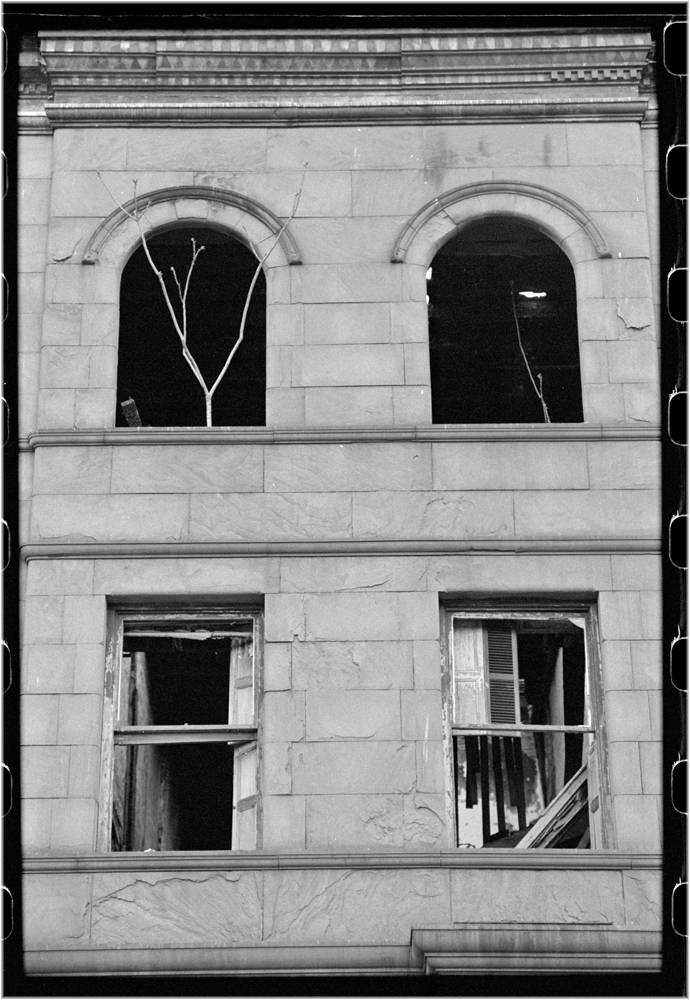 HArlem-TREE-Window-8000-1988 copy