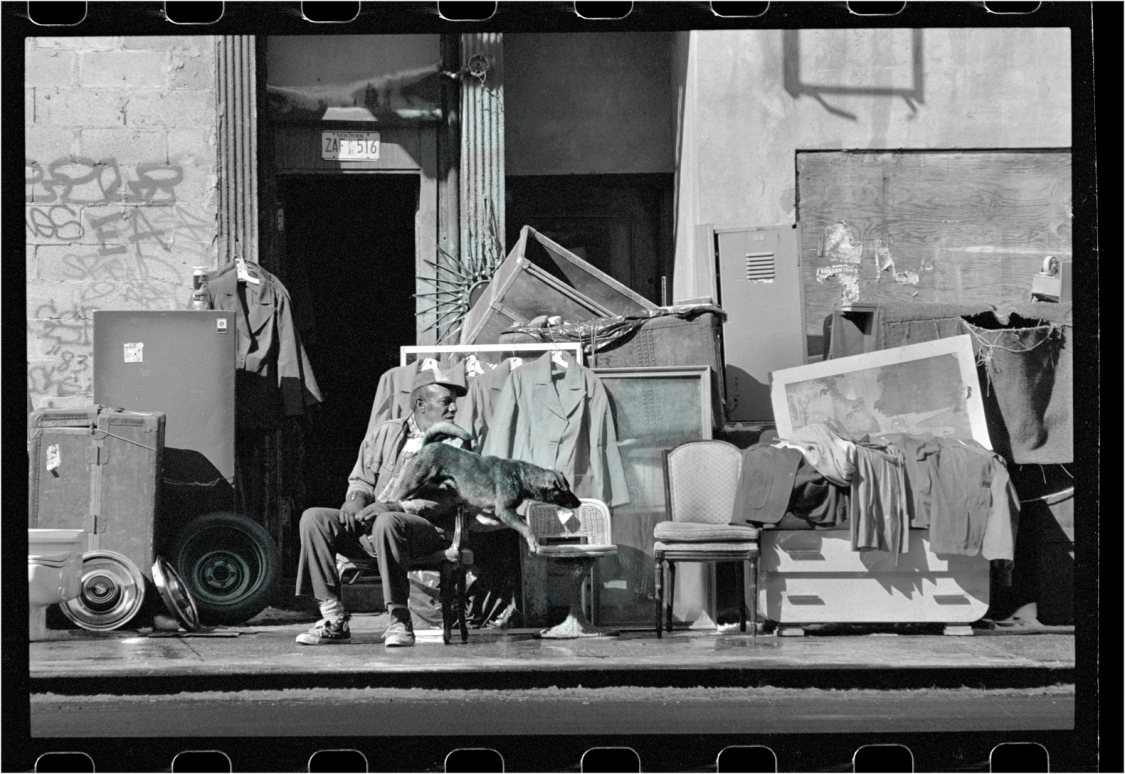 harlem-dog-jumps-junk-store-Matt-weber