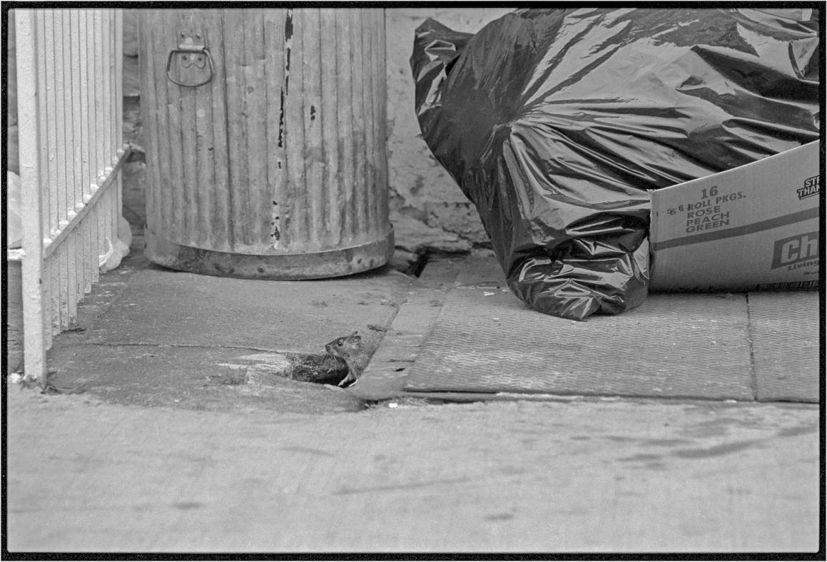 Harlem-RAT-matt-weber