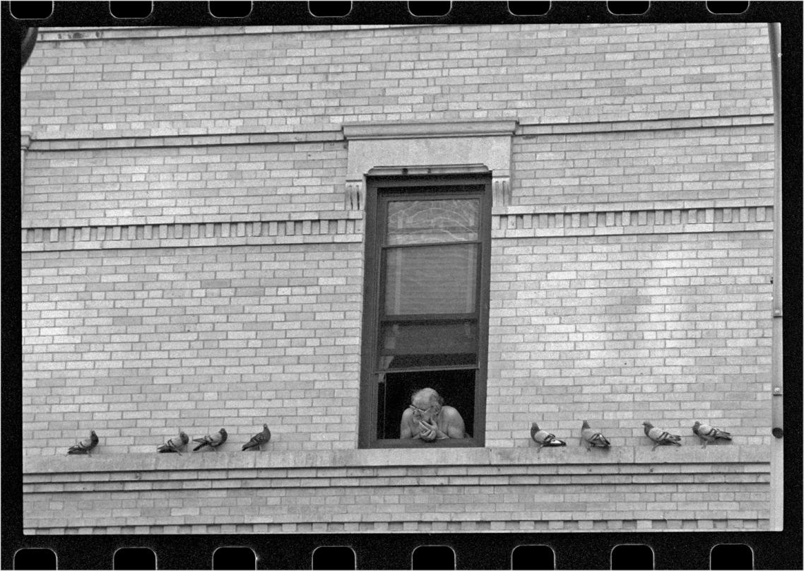 pigeons-NYC-matt-weber