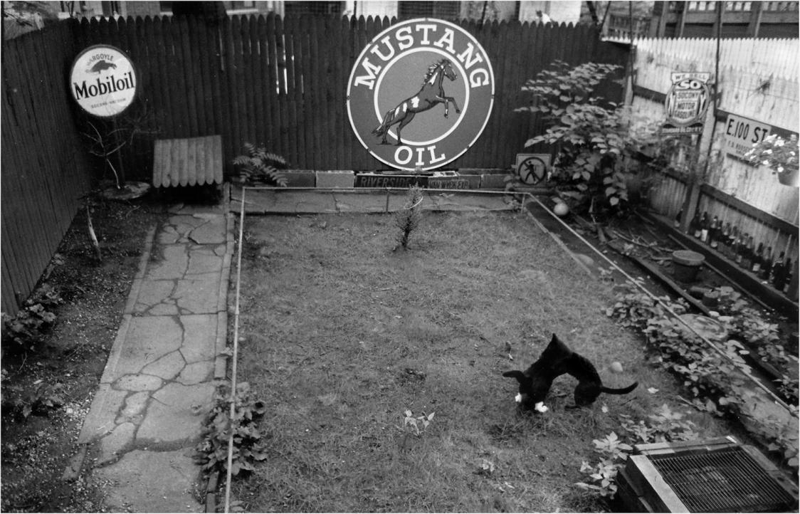 cat-fight-matt-weber