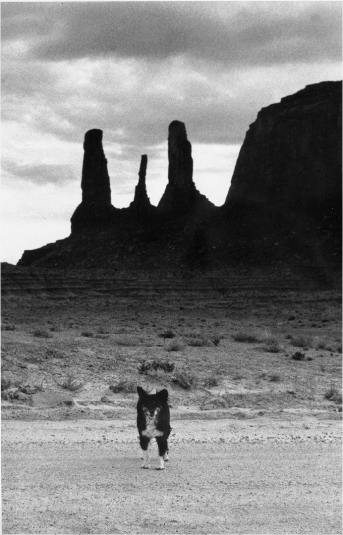 Dog-Monument-Valley-Matt-Weber
