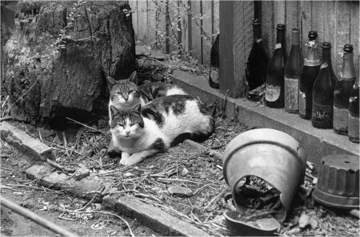 feral-cats-matt-weber