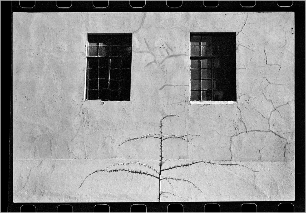 2-WindowsLittleTree-1989 copy