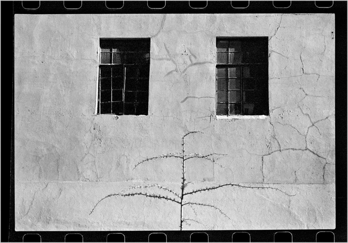 2-WindowsLittleTree-1989 copy