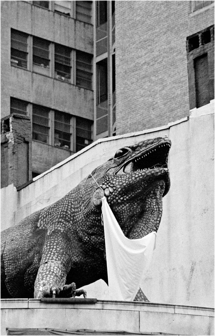 LoneStar-iguana-1988 copy