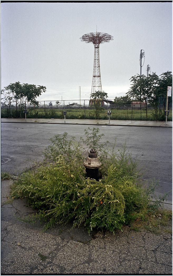 Coney-Para-Hydrant-2010 copy