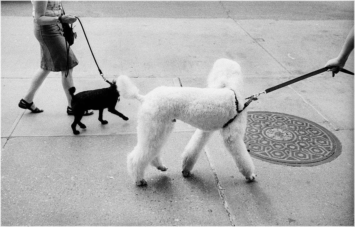 *Dog+ToyDog copy