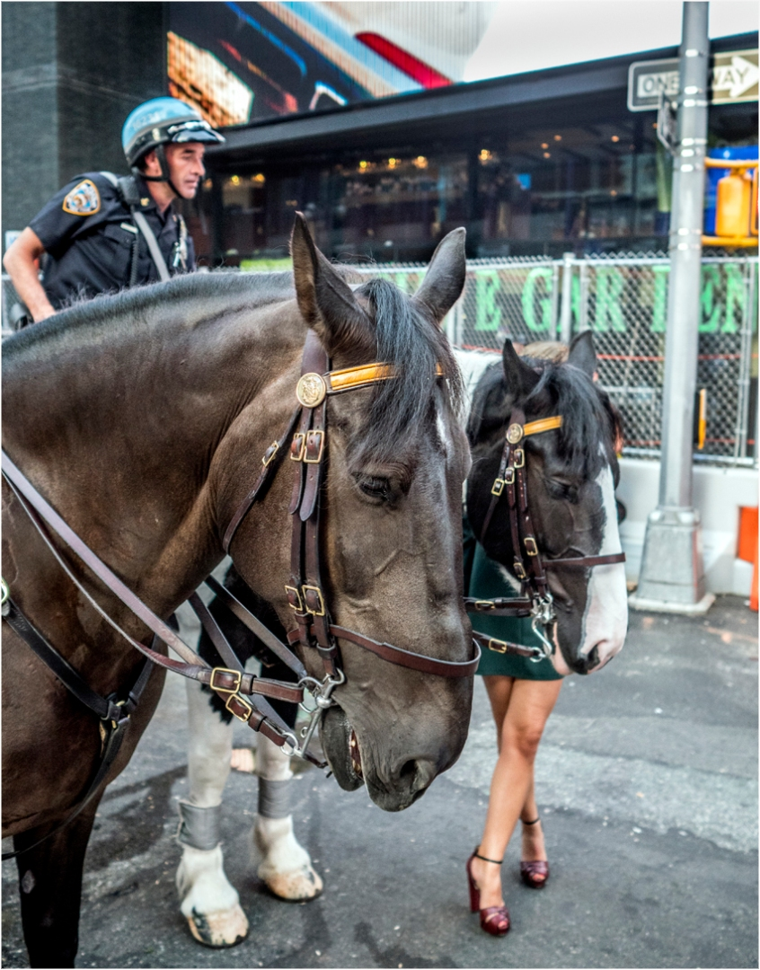*Times-Horse-Cop-More-Legs! copy