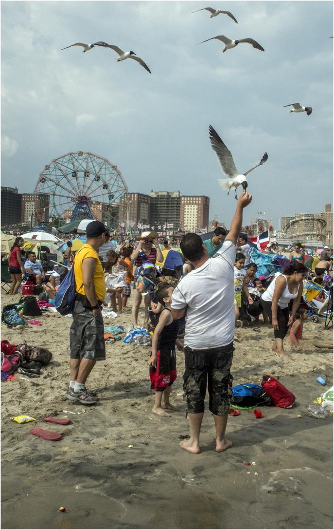 *Coney-SeaGulls-Beach-snatch copy