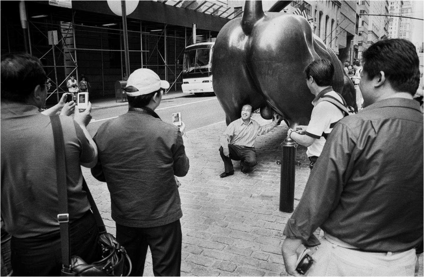 Bull-Tourists copy
