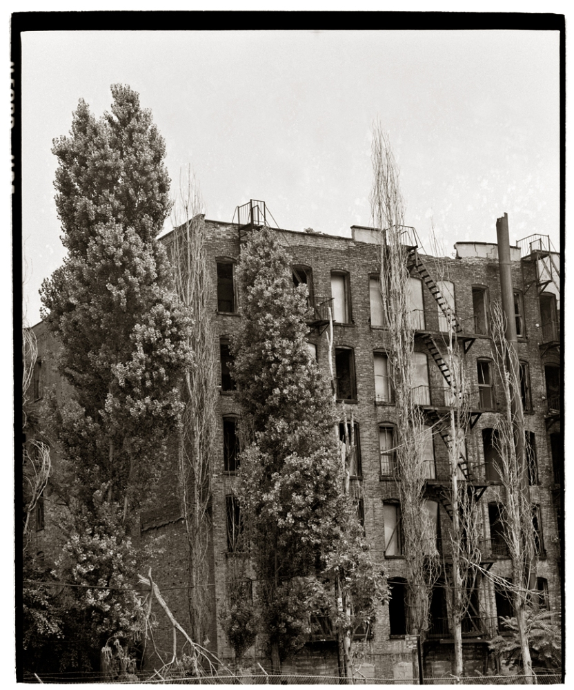 AbandonedTenements-TREES-1986 copy