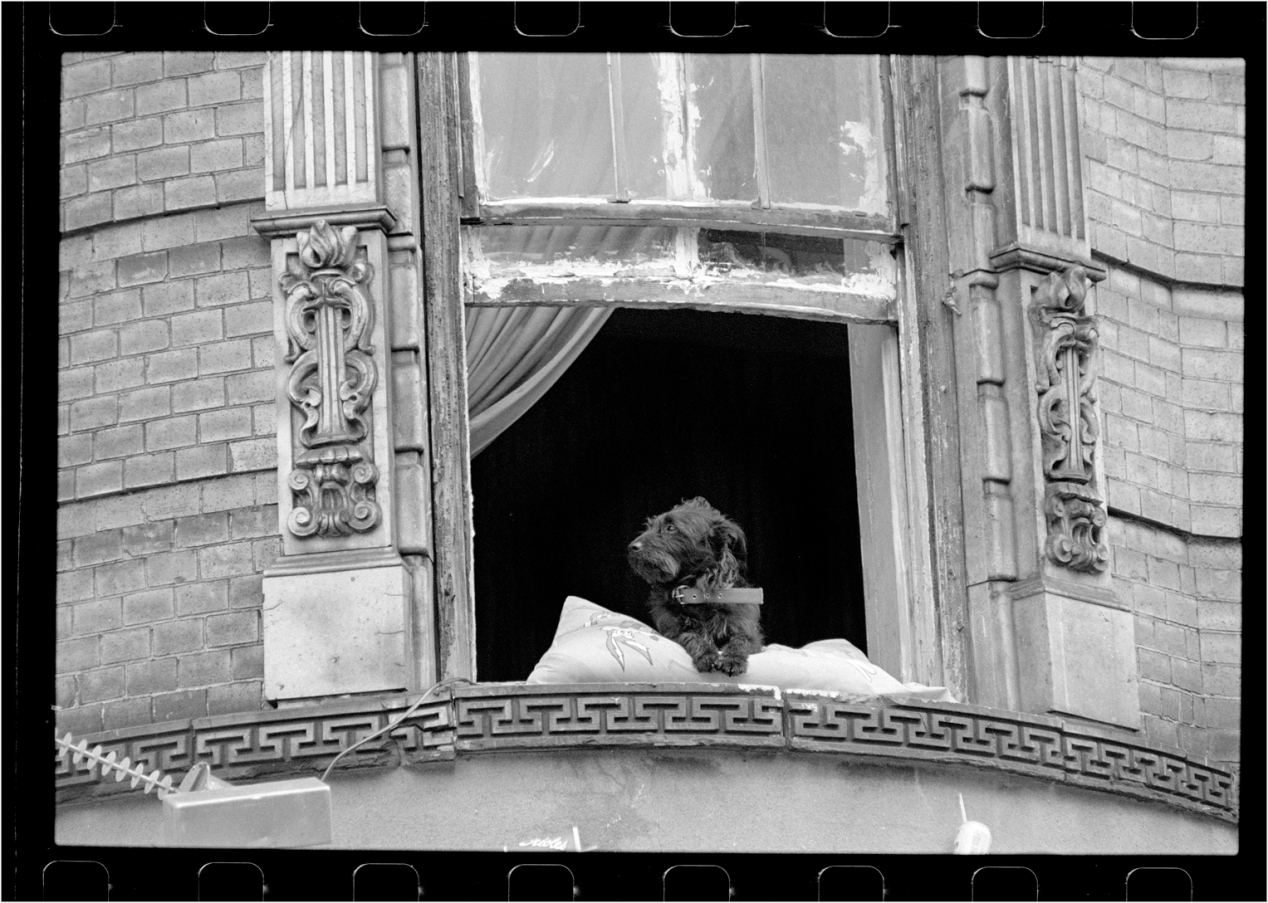 LIttle-Lord=Dog-Window-1988 copy
