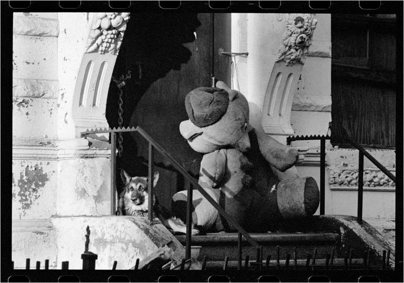 Harlem-DOG-Stuffed-Animal-1989 copy