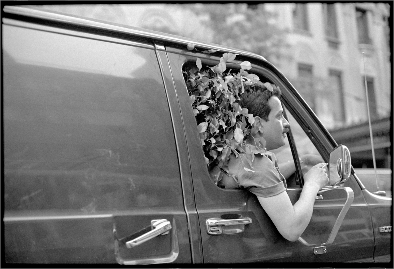 Van-Tree-Window-1988 copy