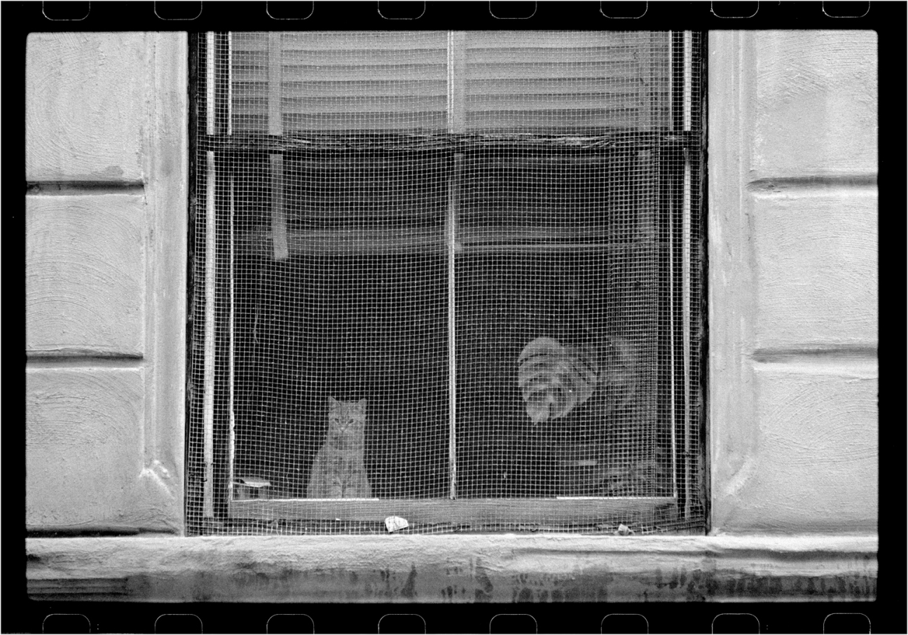 harlem-window-cat-1988-copy