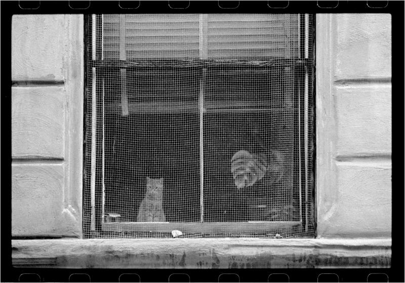 harlem-window-cat-1988-copy