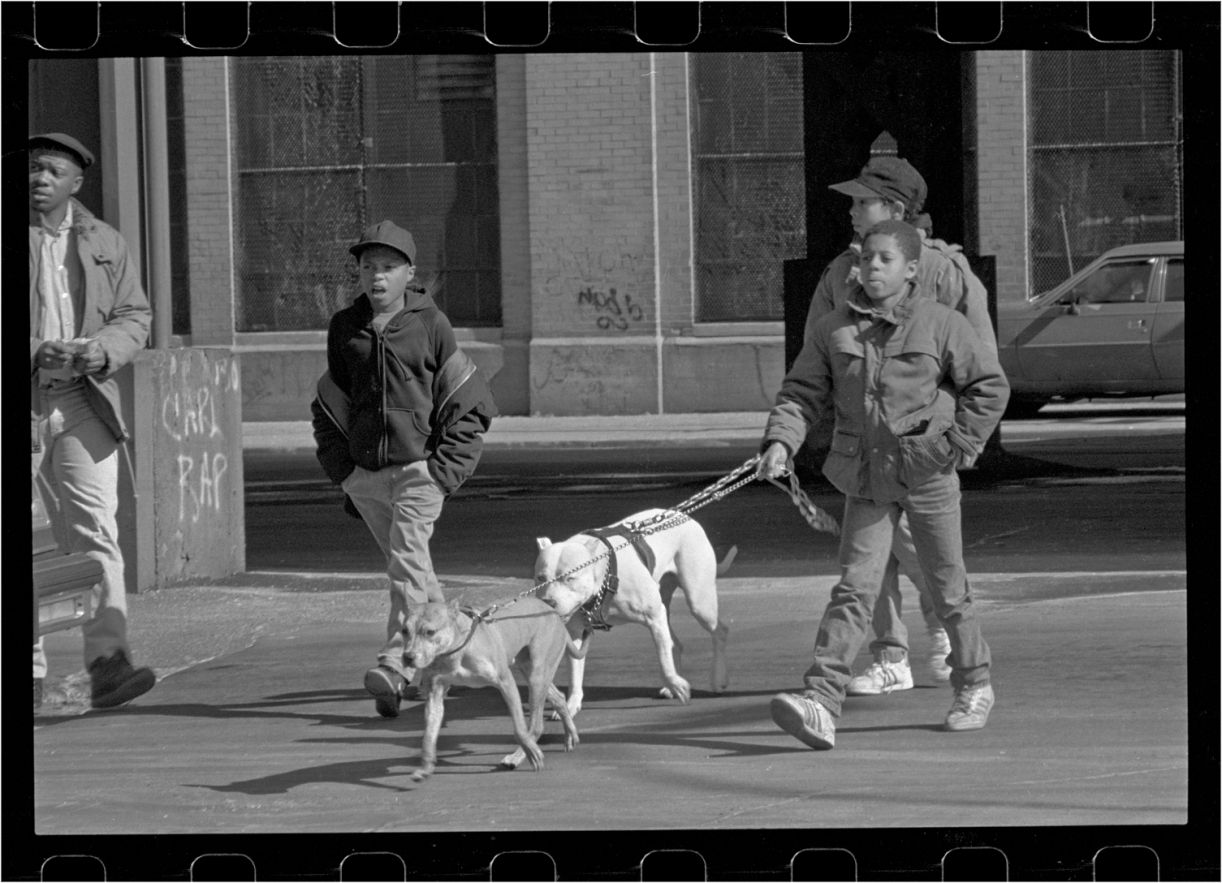 boys-pitbull-harlem-1989-copy