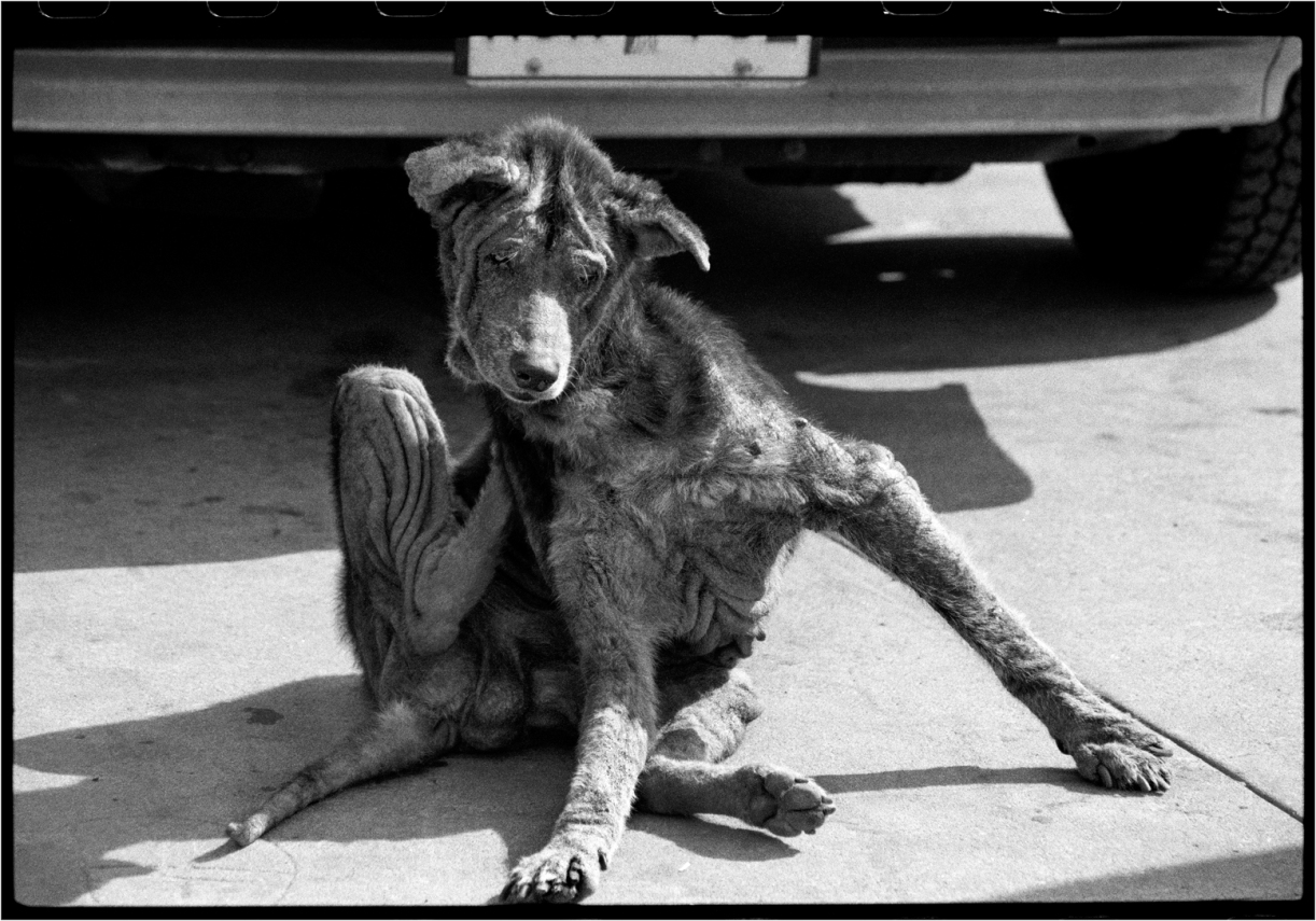 oldest-dog-scratching-1987-copy